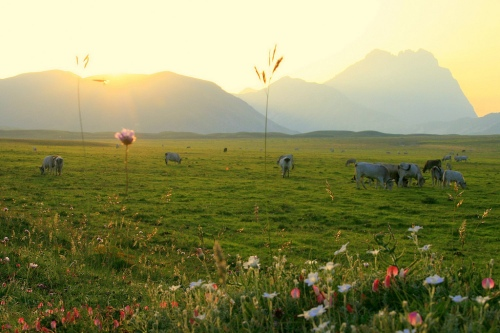 Cow pasture with sunlight pouring over the mountains like in a dream